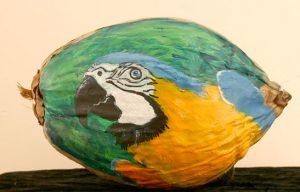 Parrot Painted Coconut