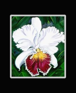 White Cattleya Orchid Print