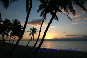 Palm Trees at Sunset Photo